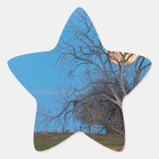 Mega Beaver Moon Star Sticker