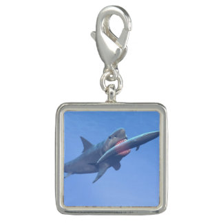 Megalodon eating a whale photo charm