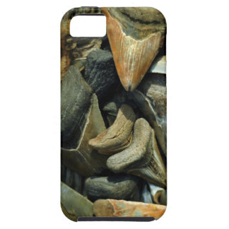 Megalodon Fossil Shark Teeth for Iphone 5 iPhone 5 Case