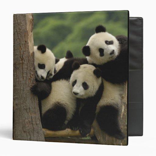 Melanoleuca d'Ailuropoda de bébés de panda géant)