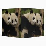 Melanoleuca d'Ailuropoda de bébés de panda géant)  Classeurs