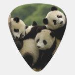 Melanoleuca d'Ailuropoda de bébés de panda géant)  Onglet De Guitare