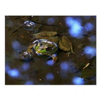 Melissa's Frog Postcard