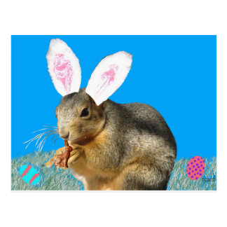 Melvin Cottontail Postcard