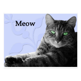 Meow de chat tigré carte postale