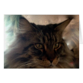 Meow Maine Coon Note Card