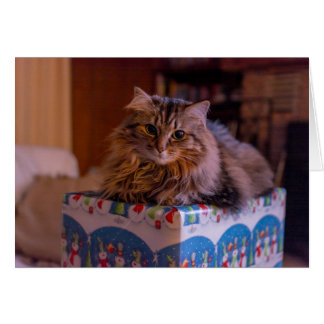 Meowy Christmas Kitty in a Gift Box Card