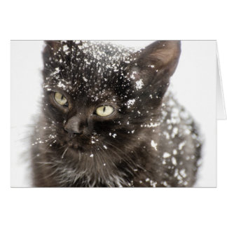 Meowy Merry Let it Snow Christmas Cat Card