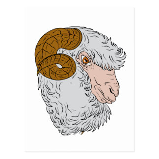 Merino Ram Sheep Head Drawing Postcard