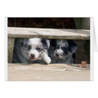 Merle Border Collie Puppies Play Note Card