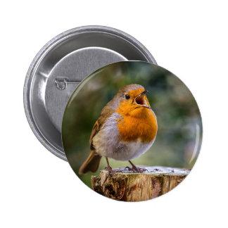 Merle de chant sur un insigne macaron rond 5 cm
