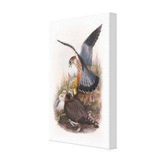 Merlin Falcon John Gould Birds of Great Britain Canvas Print