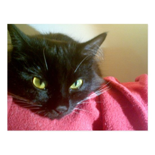 Merlin the Cat Postcard