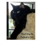 Merlin the Cat Quote Postcard