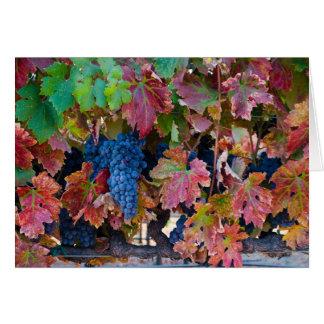 Merlot Grapes Card