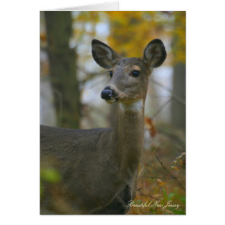 Merrill Creek Wildlife Preserve, New Jersey Card