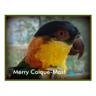 Merry Caique-Mas! Postcard