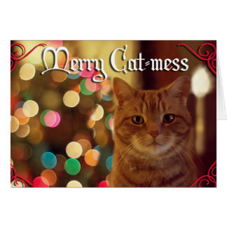 Merry Cat-mess Holiday Cards