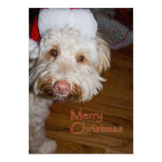 Merry Christmas  A Labradoodle with a Santa hat on Card