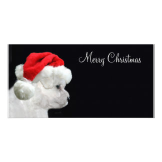 Merry Christmas Bichon Frise Card