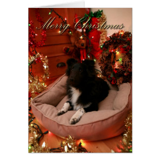 Merry Christmas, collie, sheltie Card