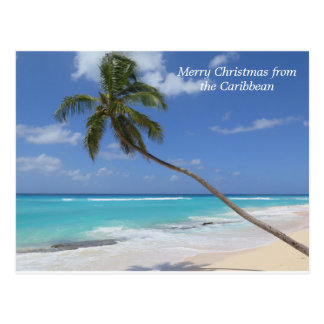Merry Christmas from the Caribbean palm tree Postcard