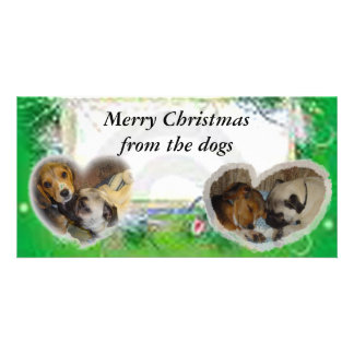 Merry Christmas from the dogs Photo Card Template
