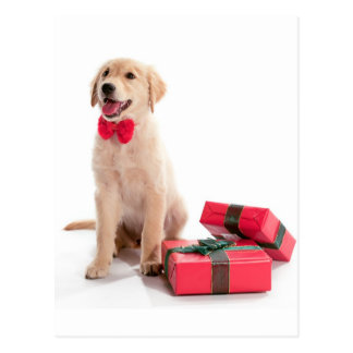 Merry Christmas Golden Retriever Puppy Postcard