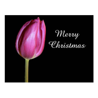 Merry Christmas Pink Tulip Flower Photo Floral Postcard