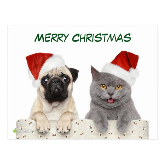 Merry Christmas Pug dog and Kittten Postcard