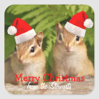 Merry christmas square labels with baby chipmunks square sticker