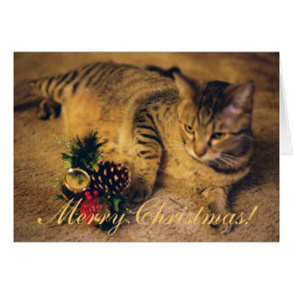 """Merry Christmas!"" Tabby cat Card"