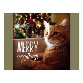 Merry Everything Cute Cat Christmas Postcard
