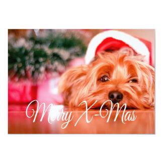 Merry X-Mas Dog Card