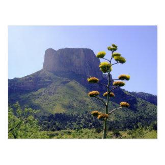 Mesa and blooming maguey 1 postcard
