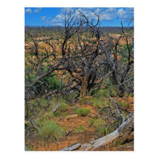 """Mesa Verde National Park"" collection Postcard"
