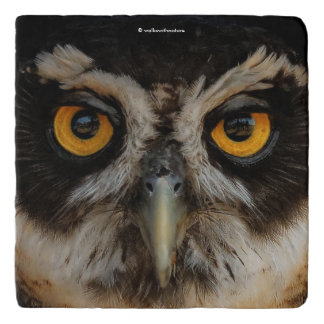 Mesmerizing Golden Eyes of a Spectacled Owl Trivet