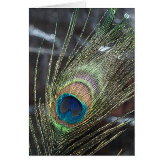 Metalic Peacock Feather Card