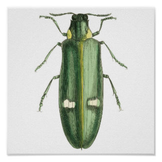 Metallic Wood-Boring Beetle Poster