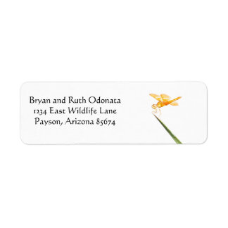 Mexican amber-wing return address label