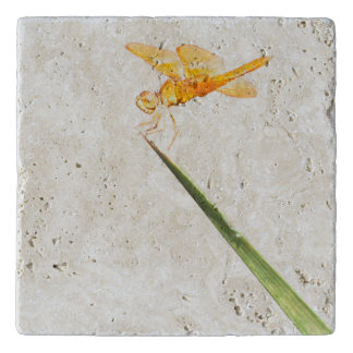 Mexican amber-wing trivet