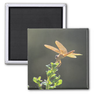 Mexican Amberwing Dragonfly Photo Magnet