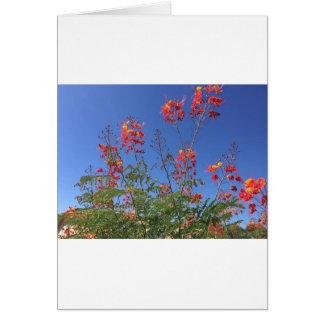 Mexican bird of paradise card