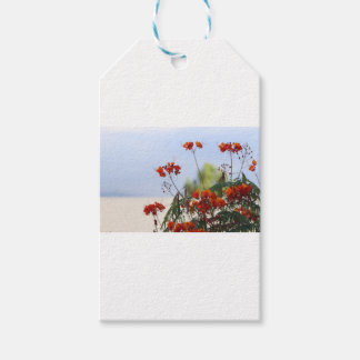 Mexican Bird of Paradise Gift Tags