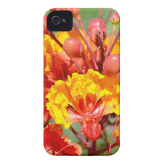 Mexican Bird of Paradise iPhone 4 Cover