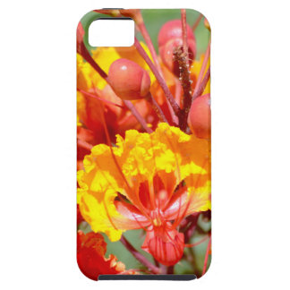Mexican Bird of Paradise iPhone 5 Covers