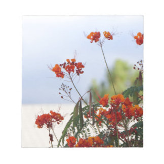 Mexican Bird of Paradise Notepad