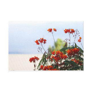 Mexican Bird of Paradise on Canvas