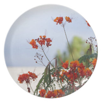 Mexican Bird of Paradise Plate