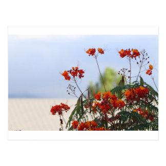 Mexican Bird of Paradise Postcard